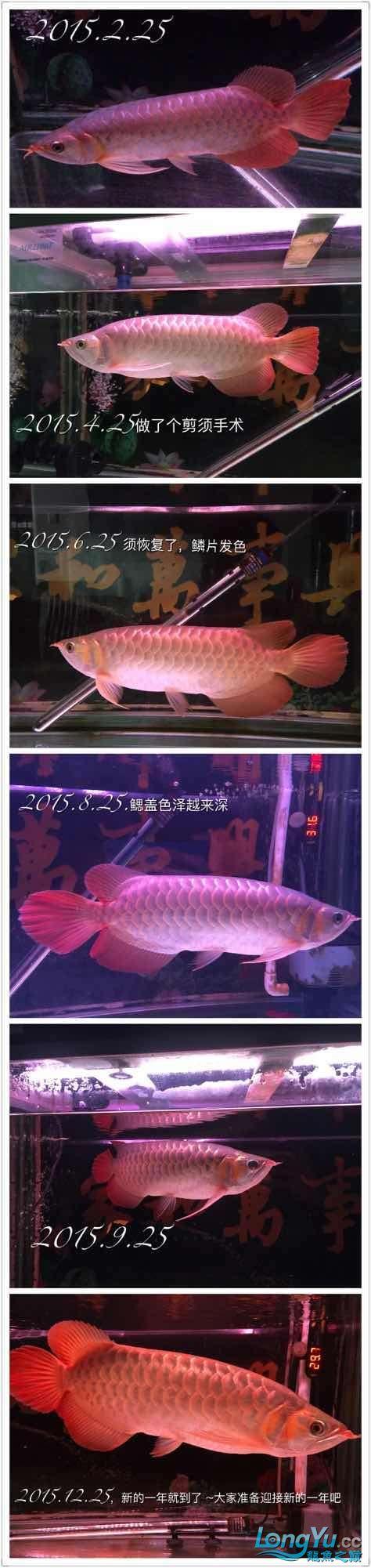 年尾了整理一下爱龙照请各位大神鱼友南京哪个水族店有白子关刀鱼随便评评吧 南京水族批发市场