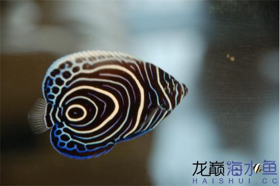 图片21_副本.png