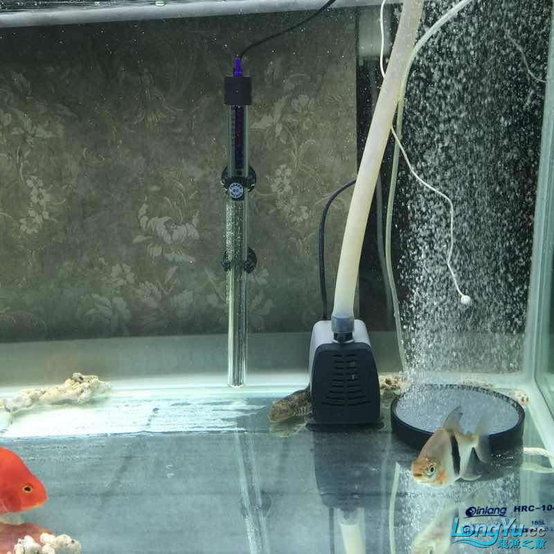 水质迅速变清 宜宾龙鱼论坛 宜宾龙鱼第3张