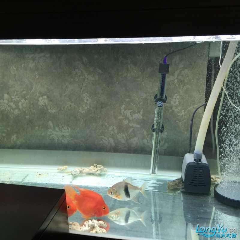 水质迅速变清 宜宾龙鱼论坛 宜宾龙鱼第4张