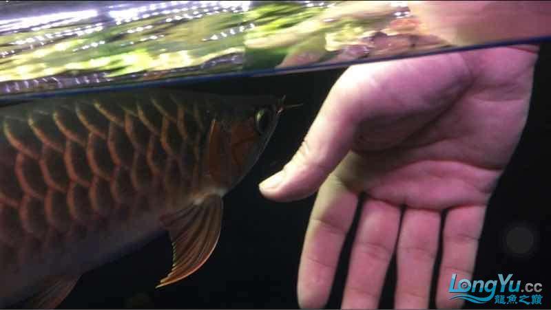 玩鱼这样才刺激 宜宾龙鱼论坛 宜宾龙鱼第4张