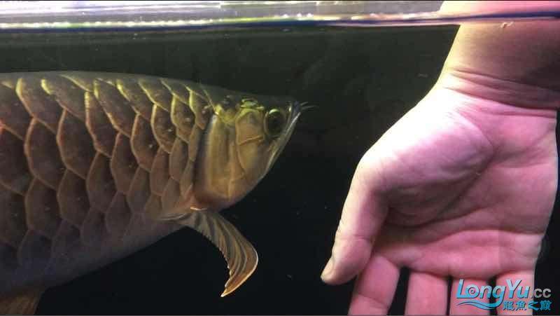 玩鱼这样才刺激 宜宾龙鱼论坛 宜宾龙鱼第8张