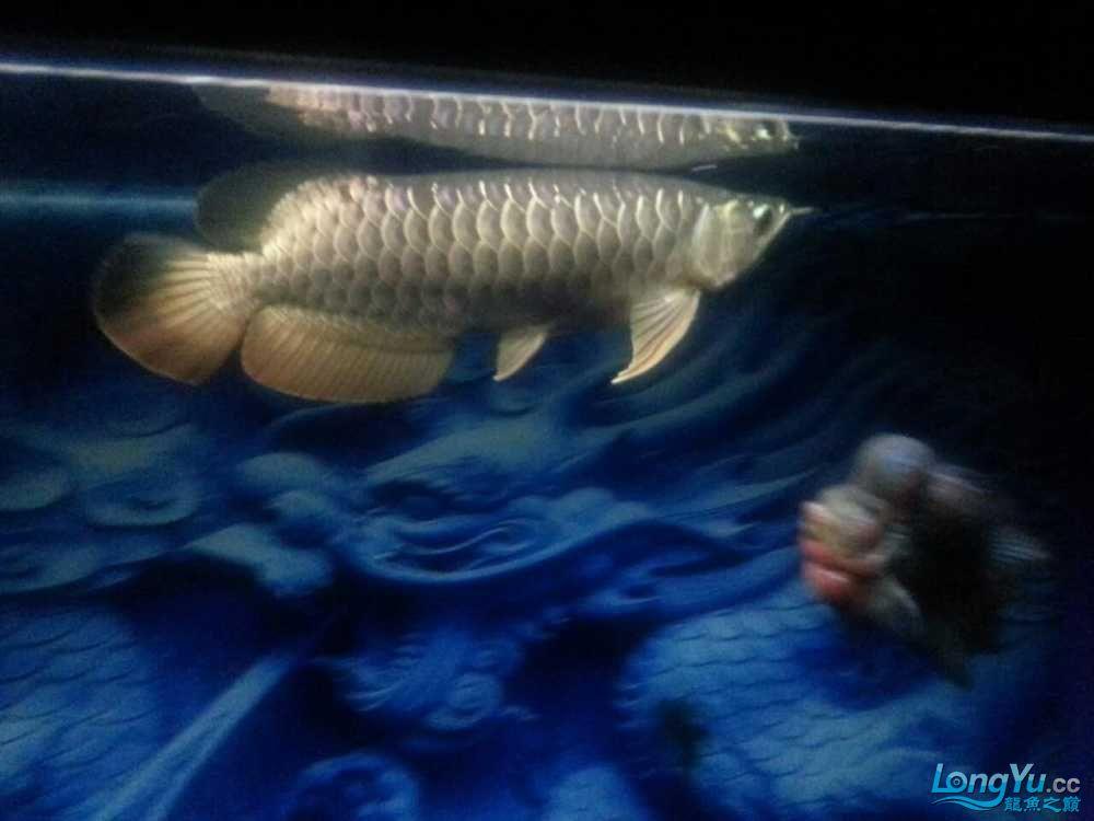 十天了到家 宜宾龙鱼论坛 宜宾龙鱼第3张