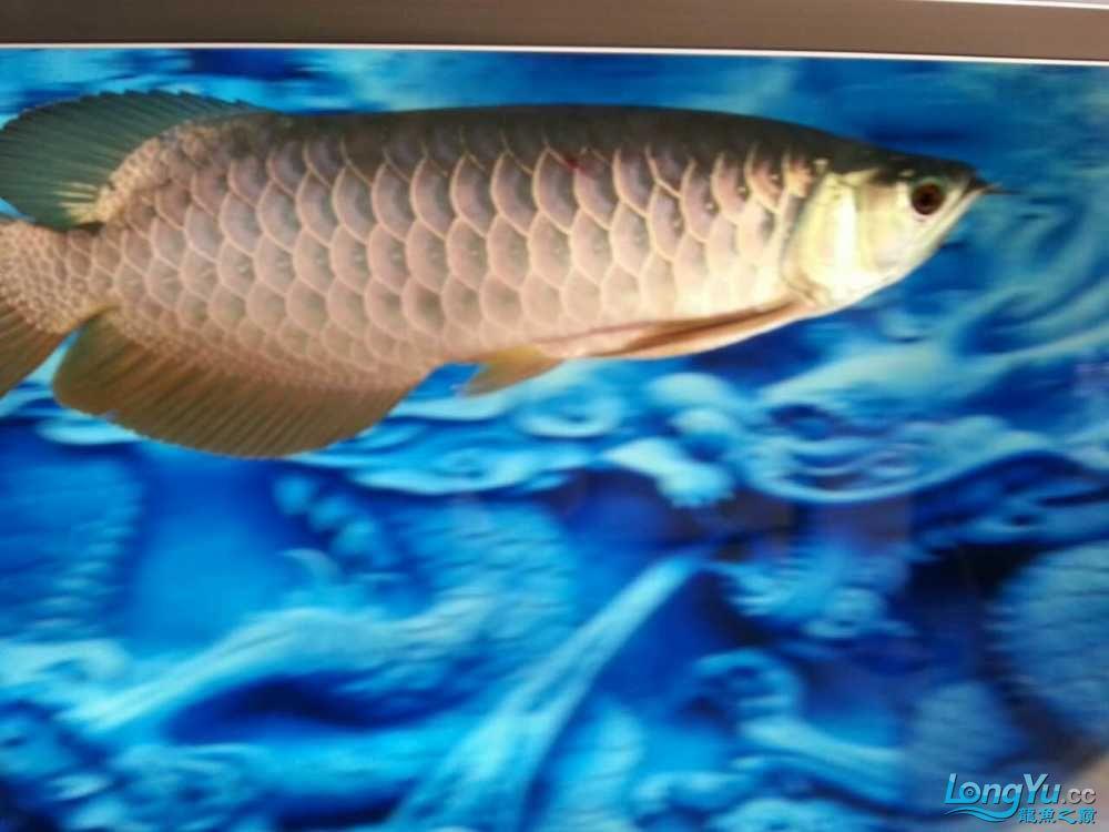 十天了到家 宜宾龙鱼论坛 宜宾龙鱼第9张