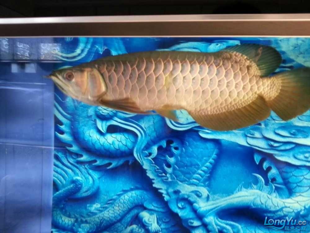 十天了到家 宜宾龙鱼论坛 宜宾龙鱼第10张