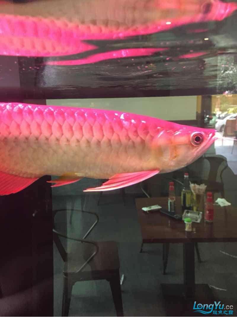 看看有没有前途 宜宾水族批发市场 宜宾龙鱼第1张