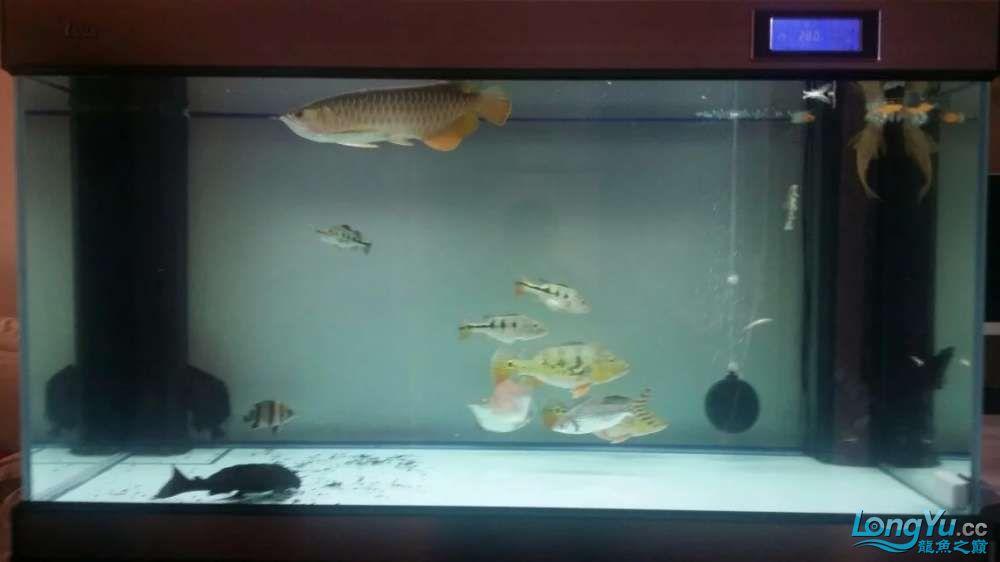 石家庄奥佳水族【我想要龍门水族穆西红龙】+我的鱼儿们