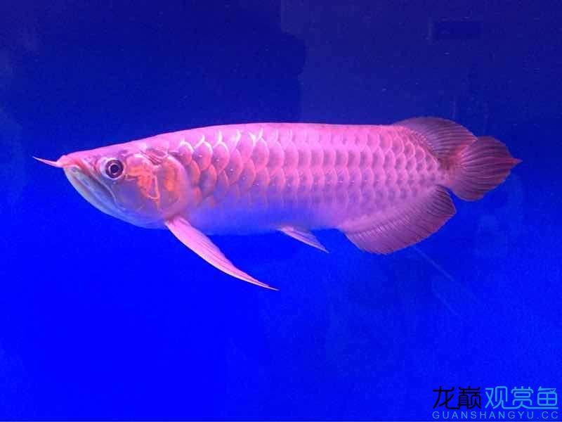 好不好你懂的!顺祝各位鱼友们新年快乐,万事如意,如鱼得水恭喜恭喜!