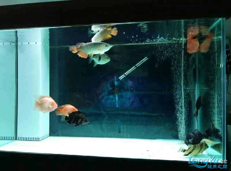 家里的印尼与泰北 南昌龙鱼论坛 南昌龙鱼第6张