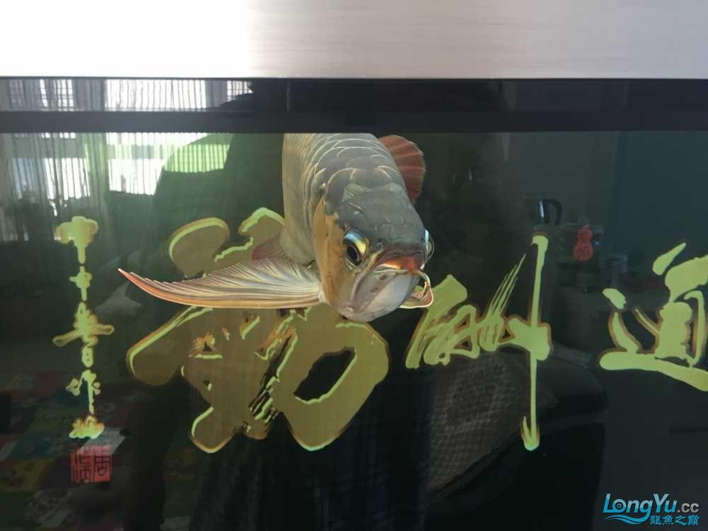 龙鱼永远是最漂亮的 南昌龙鱼论坛 南昌龙鱼第3张