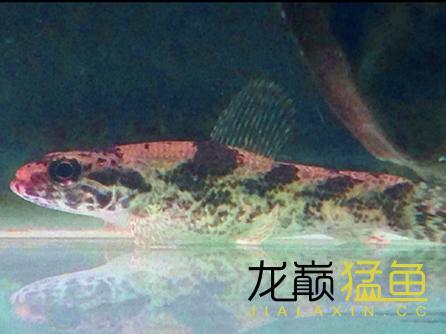 Screenshot_2016-02-29-00-30-38_com.miui.gallery_副本.png