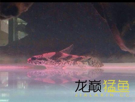Screenshot_2016-02-29-00-30-33_com.miui.gallery_副本.png
