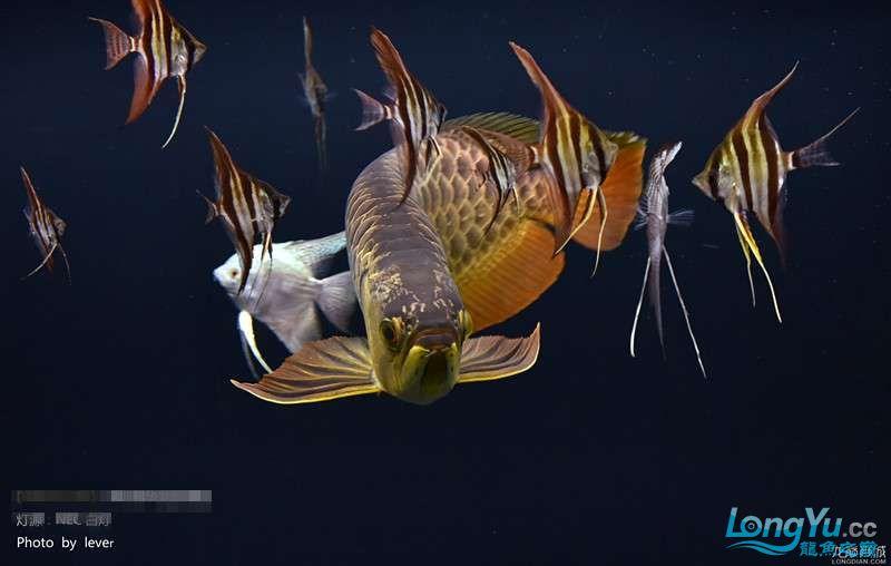 您还如此精西宁福满钻鱼哪个店的最好致分享二 西宁龙鱼论坛 西宁龙鱼第3张