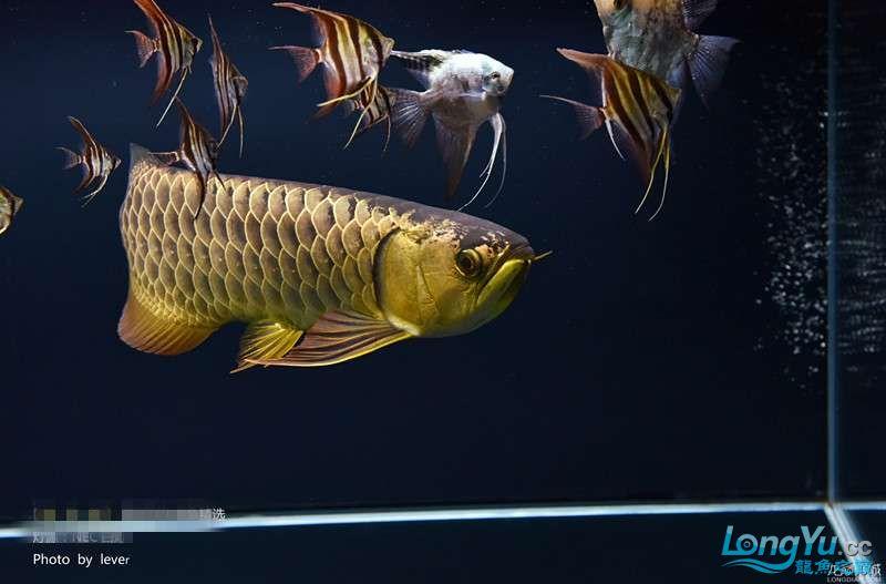 您还如此精西宁福满钻鱼哪个店的最好致分享二 西宁龙鱼论坛 西宁龙鱼第5张
