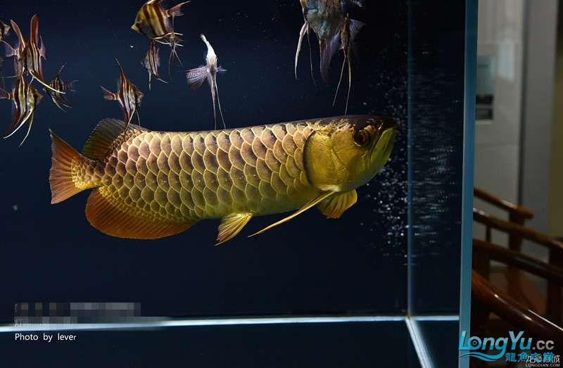 您还如此精西宁福满钻鱼哪个店的最好致分享二 西宁龙鱼论坛 西宁龙鱼第7张