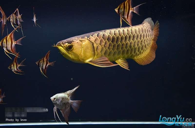 您还如此精西宁福满钻鱼哪个店的最好致分享二 西宁龙鱼论坛 西宁龙鱼第9张