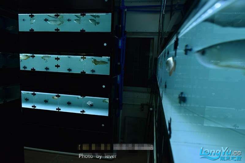 您还如此精西宁福满钻鱼哪个店的最好致分享二 西宁龙鱼论坛 西宁龙鱼第23张