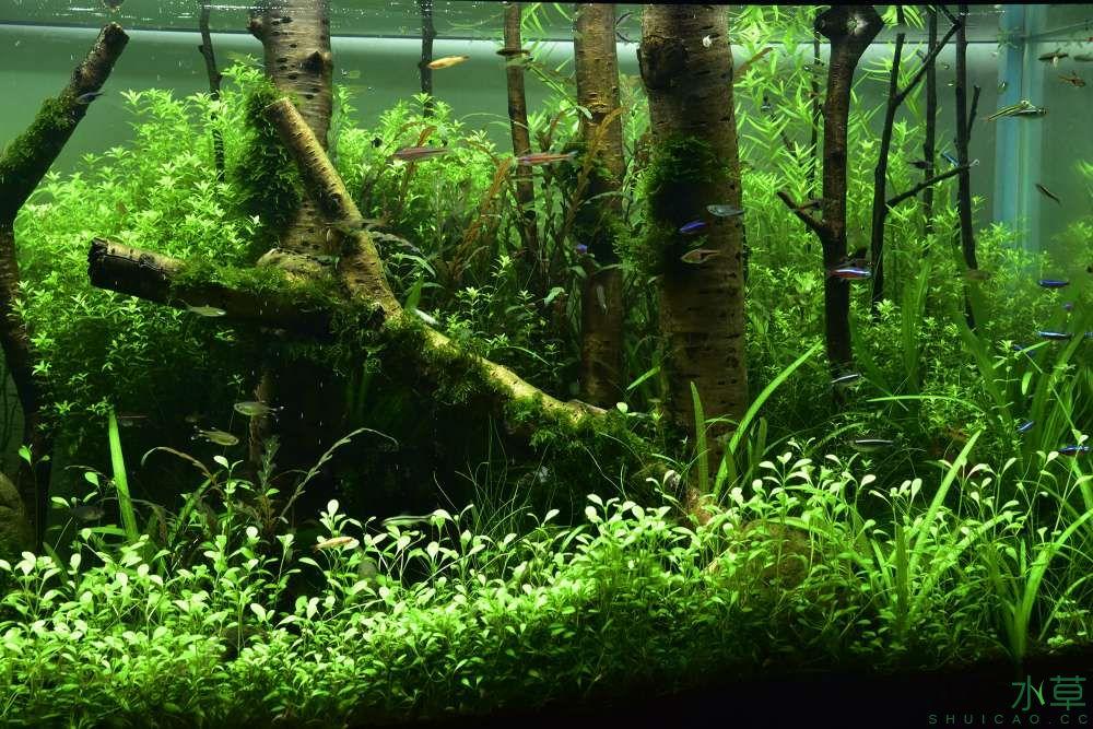 《绿野丛林》3月15日两个半月