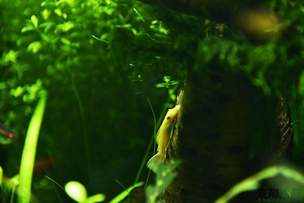 《绿野丛林》3月15日的黄金胡子长大了一些