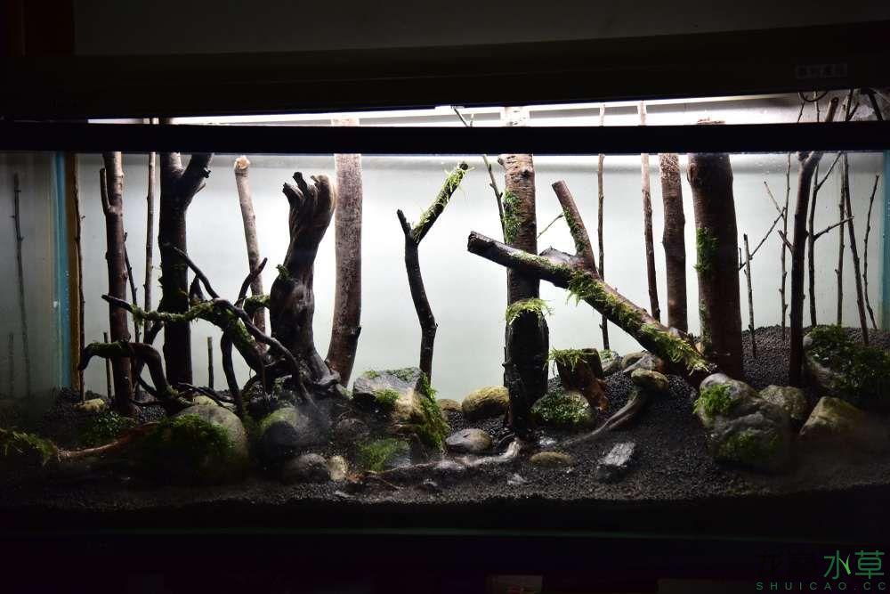我的《绿野丛林》1月1日开缸