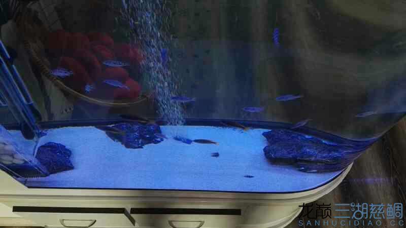 鱼缸里有密集的点点很多很多蜗版帮忙分析下 龙鱼论坛 祥龙水族联盟第4张