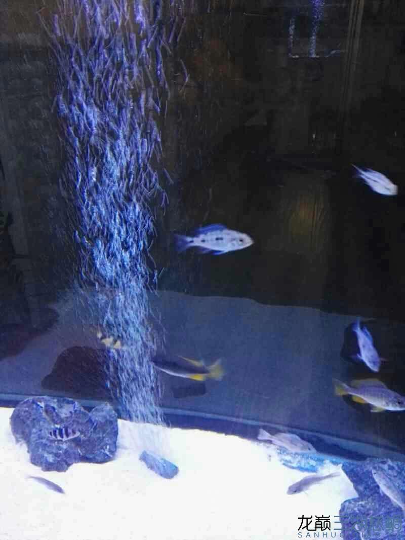 鱼缸里有密集的点点很多很多蜗版帮忙分析下 龙鱼论坛 祥龙水族联盟第5张