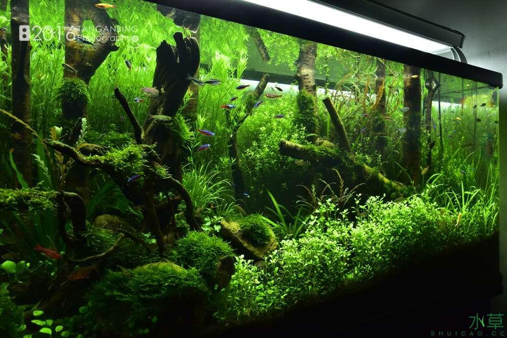 《绿野丛林》3个月 侧边