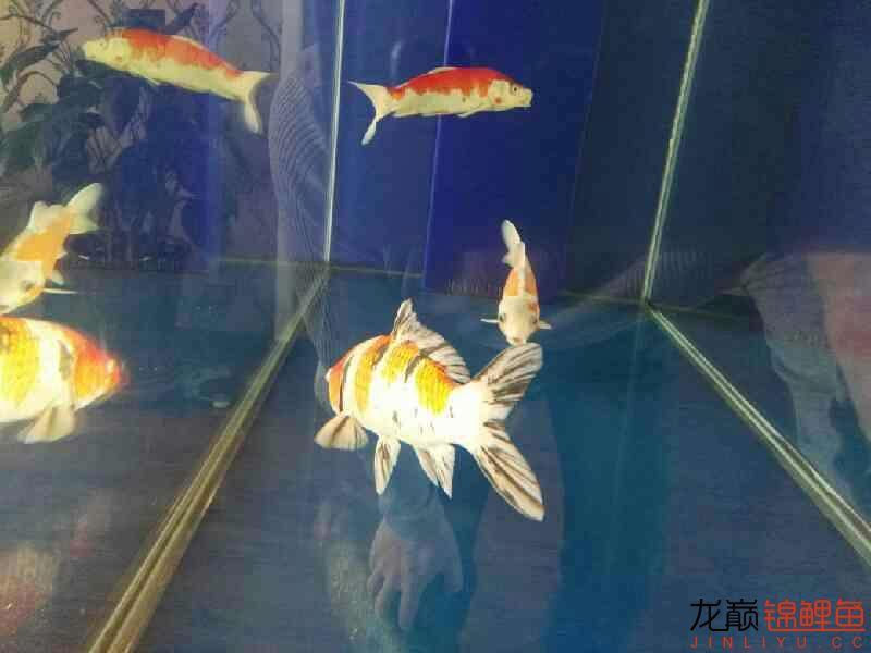 不过水的结果鱼病了 温州龙鱼论坛 温州龙鱼第1张