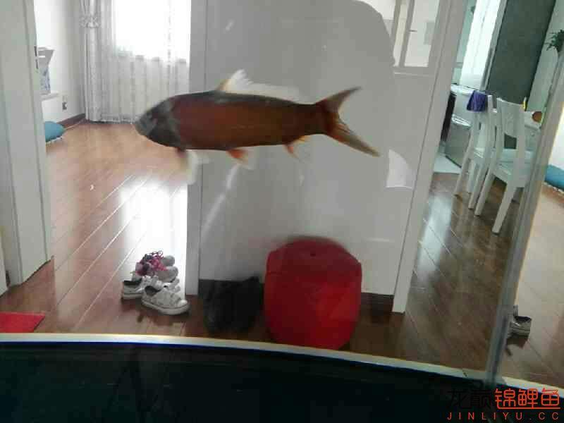 不过水的结果鱼病了 温州龙鱼论坛 温州龙鱼第6张