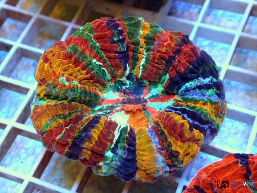 rainbow-acanthophyllia-1024x768.jpg