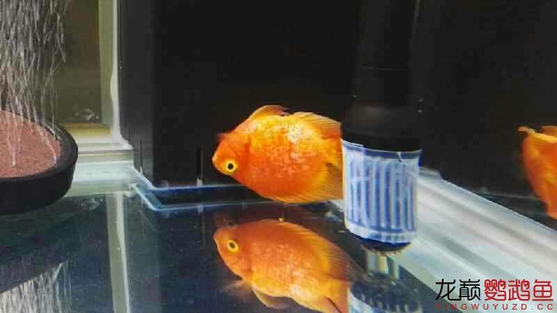 这是怎么了早上还是好的 福州龙鱼论坛 福州龙鱼第1张