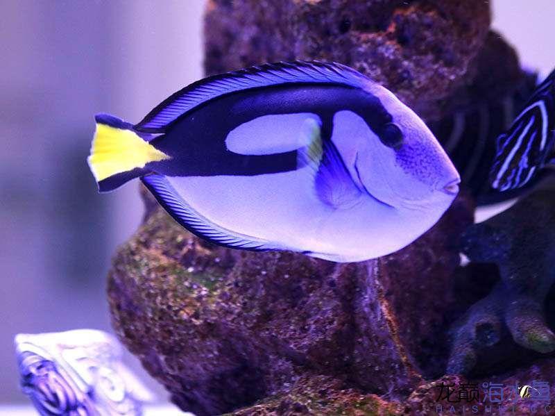 鱼 (11).JPG