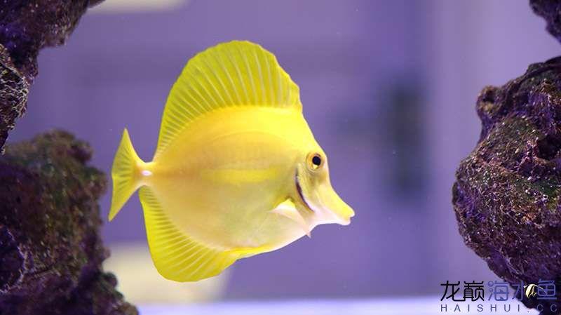 鱼 (22).JPG
