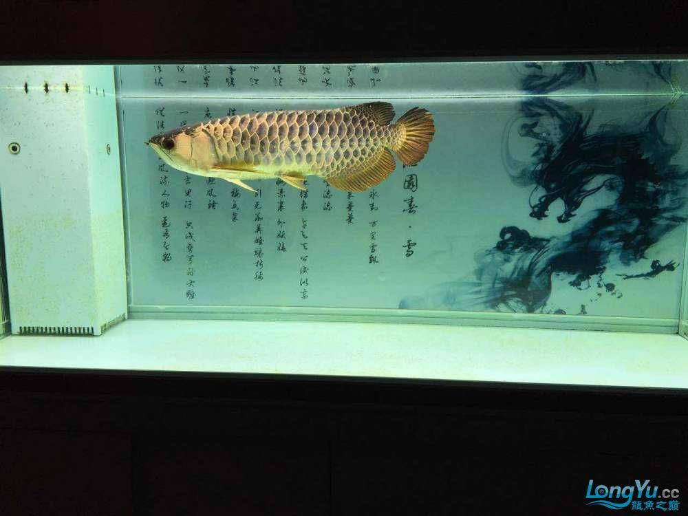 小鱼混养,两年之后. 青岛龙鱼论坛 青岛龙鱼第5张