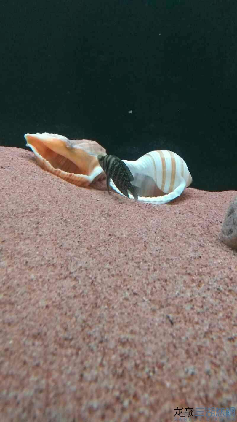 鱼缸不加盖子怎样防止鱼跳缸榆林新世纪水族馆?