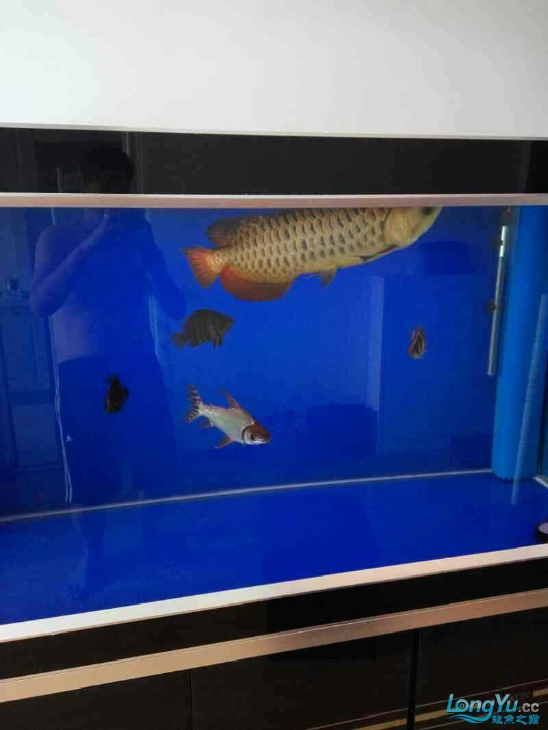 杭州海鲜池新入手小红龙一条建档,请大家给点意见