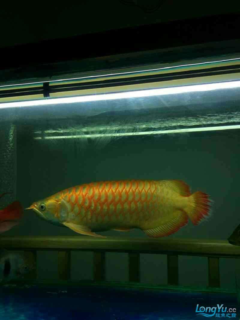 高背?宝石青岛鱼缸定制? 青岛水族批发市场 青岛龙鱼第4张