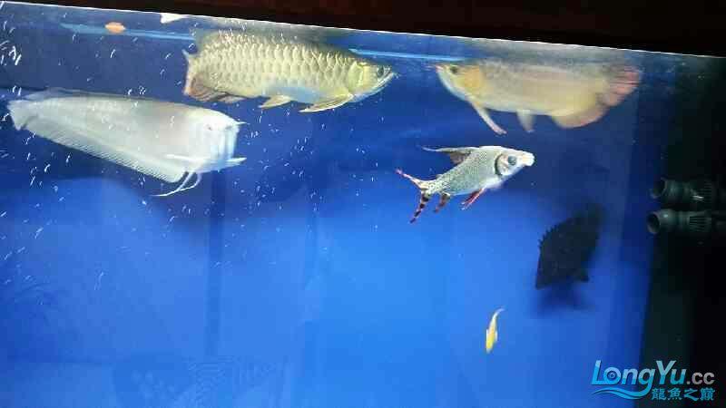NEC6青岛家用鱼缸水泵700 青岛水族批发市场 青岛龙鱼第2张