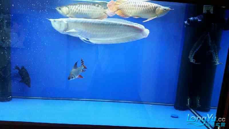 NEC6青岛家用鱼缸水泵700 青岛水族批发市场 青岛龙鱼第6张