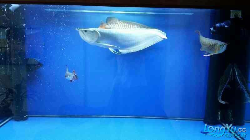 NEC6青岛家用鱼缸水泵700 青岛水族批发市场 青岛龙鱼第8张