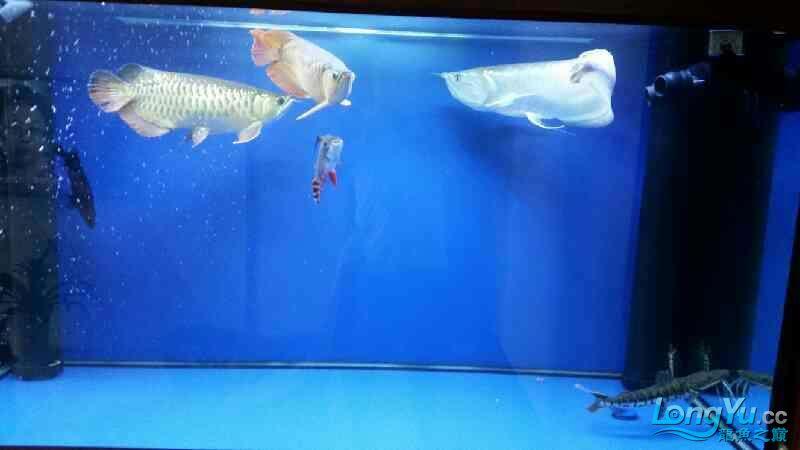 NEC6青岛家用鱼缸水泵700 青岛水族批发市场 青岛龙鱼第7张