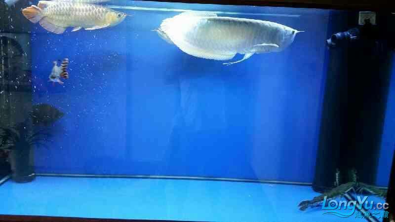NEC6青岛家用鱼缸水泵700 青岛水族批发市场 青岛龙鱼第9张