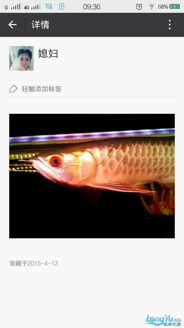 青岛花鸟大家早新的換水器使用 青岛水族批发市场 青岛龙鱼第6张