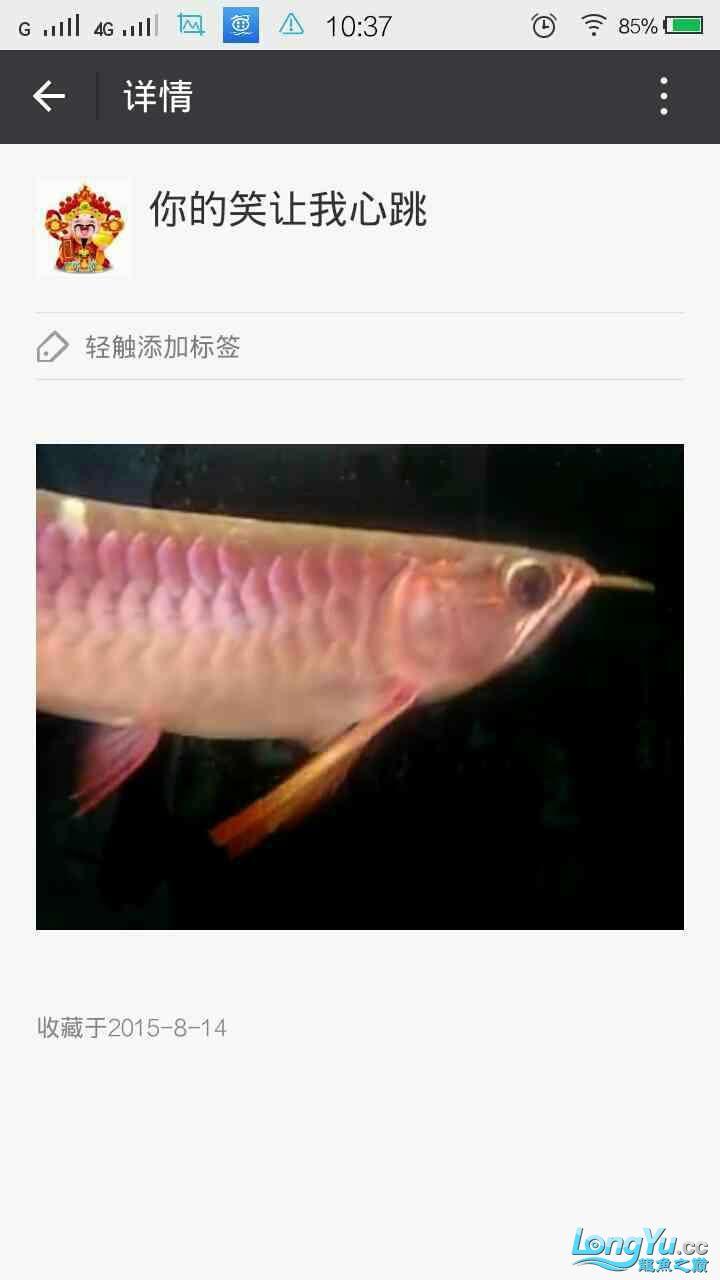 青岛花鸟大家早新的換水器使用 青岛水族批发市场 青岛龙鱼第7张