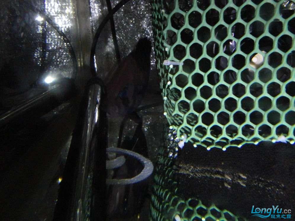 哪种水泵吸鱼便效果好?青岛附近水族馆青岛龙鱼转让 青岛水族批发市场 青岛龙鱼第3张