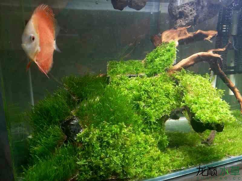 为几个缸开缸杭州锦鲤池定做准备的40片莫斯