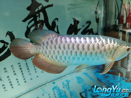 请台州花鸟鱼虫网问是过背吗-- 台州水族批发市场 台州水族批发市场第7张