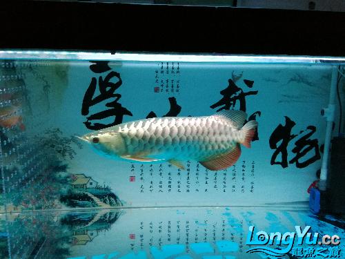 请台州花鸟鱼虫网问是过背吗-- 台州水族批发市场 台州水族批发市场第5张