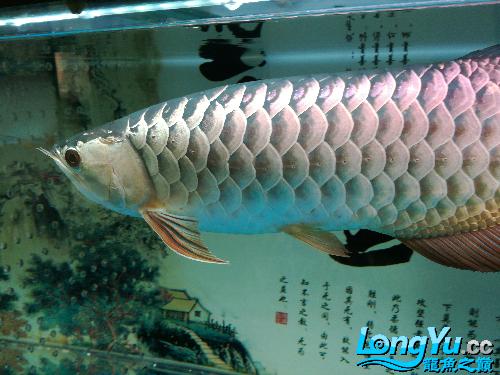 请台州花鸟鱼虫网问是过背吗-- 台州水族批发市场 台州水族批发市场第4张