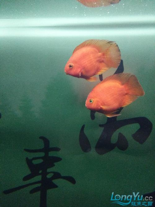 求养鱼知识 温州龙鱼论坛 温州龙鱼第2张